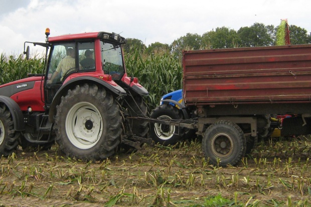 PZPK: Koszenie kukurydzy na wysokość nie mniejszą niż 10 cm