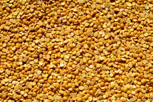 Nowy gatunek grochu źródłem cennego białka