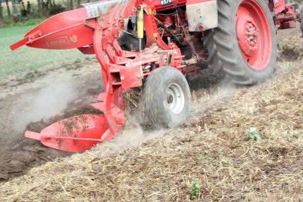 Obornik stosowany na ściernisko jak najszybciej wymieszać z glebą