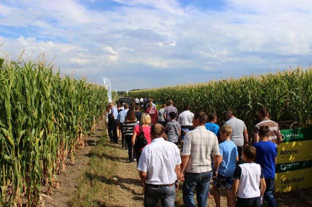 Festiwal kukurydzy na Mazowszu