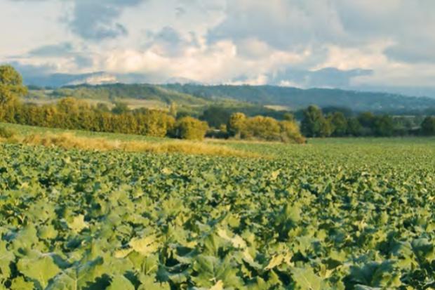Zasiewy rzepaku ozimego, wskazówki agrotechniczne