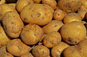 Produkcja warzyw do przetwórstwa w Europie