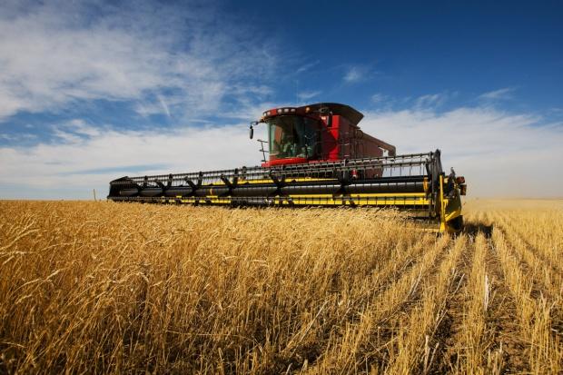 Wpływ suszy na zbiory pszenicy w UE