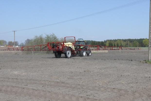 Odchwaszczanie zbóż jesienią