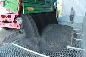 Ponad 190 tys. ton zbóż i rzepaku - w magazynach Elewarru