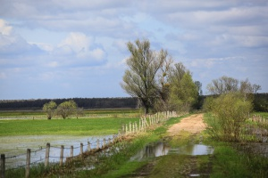 Z powodu suszy można kosić łąki w Biebrzańskim Parku Narodowym na siano