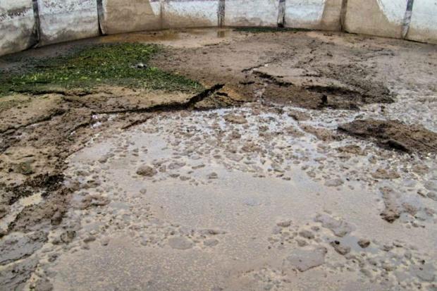 Gnojowica niedoceniany przez wielu hodowców nawóz naturalny