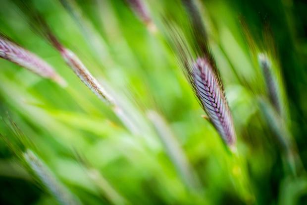 Zastosowanie biostymulatorów aminokwasowych: Agriker Top i Agriker Grow