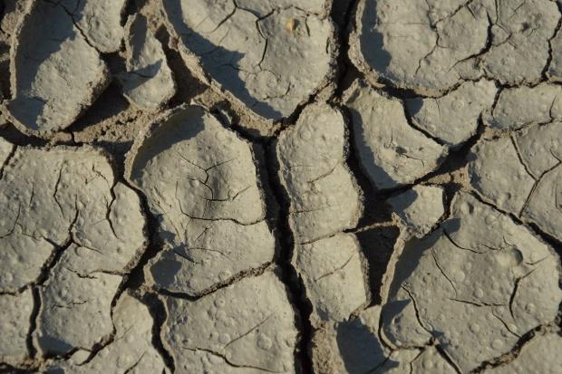 WMO: El Nino ma być najsilniejsze w historii