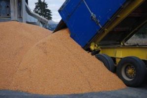 Stagnacja na rynku zbóż – ceny bez zmian