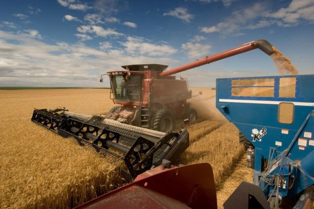 IERiGŻ: Zbiory zbóż szacowane są na 29,1 mln ton