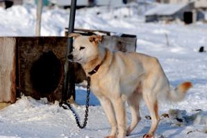 Projekt noweli ustawy o ochronie zwierząt - do podkomisji