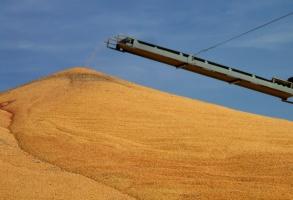 GUS: W sierpniu spadły ceny większości produktów rolnych