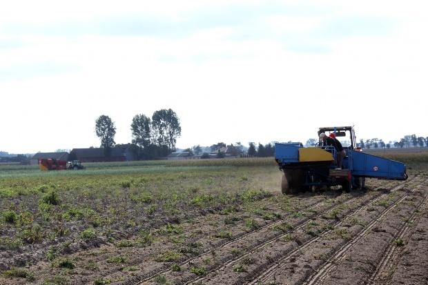 Zbiory ziemniaków w pełni – w centrum Polski plony są niskie