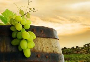 Powstała pierwsza w Polsce winnica biodynamiczna