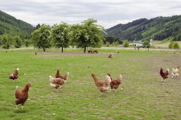 Raport: W 2014 r. spadła liczba gospodarstw ekologicznych