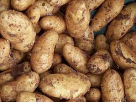 Niemcy: Mniejsze zbiory ziemniaków