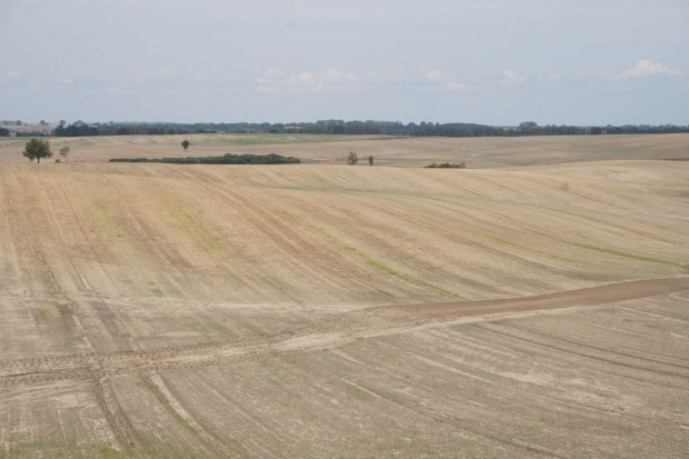 Przygotuj rzepak na zimę, tak jak to robią Czesi  we wczesnych fazach rozwojowych