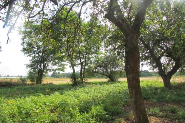 Wstrzymania sprzedaży ziemi ANR nie będzie