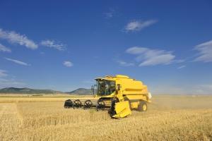 Dwa nowe rekordy światowe zbiorów pszenicy w Wielkiej Brytanii