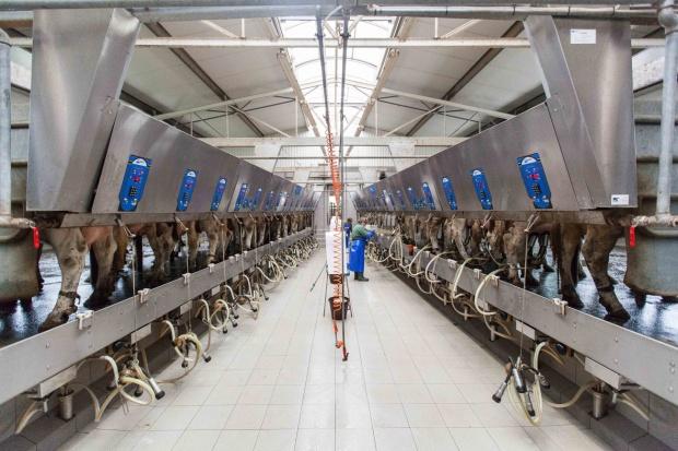Fonterra podnosi prognozy cen mleka