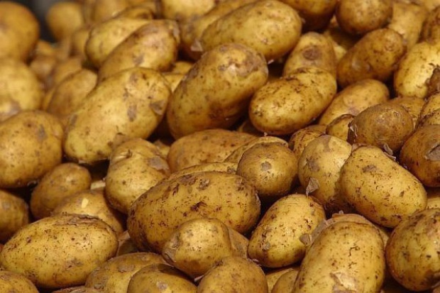 Wielkość zbiorów ziemniaka w Unii