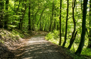 Senat zaakceptował ustawę o lasach