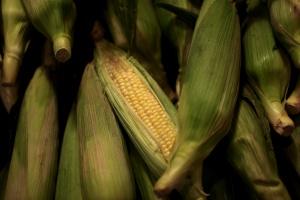 19 państw unijnych chce mieć status wolnych od GMO