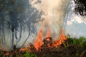 Bawarski minister leśnictwa sprawcą pożaru lasu