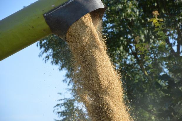 FAO: Wzrost światowego zużycia zbóż