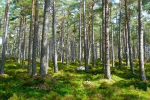 Konferencja Forest Europe