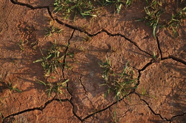 Odszkodowania suszowe w Rumunii