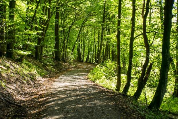 Prezydent zawetował nowelę ustawy, która umożliwiała sprzedaż lasów