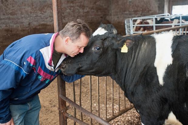 Kolejny nabór wniosków o udzielenie pomocy dla producentów mleka