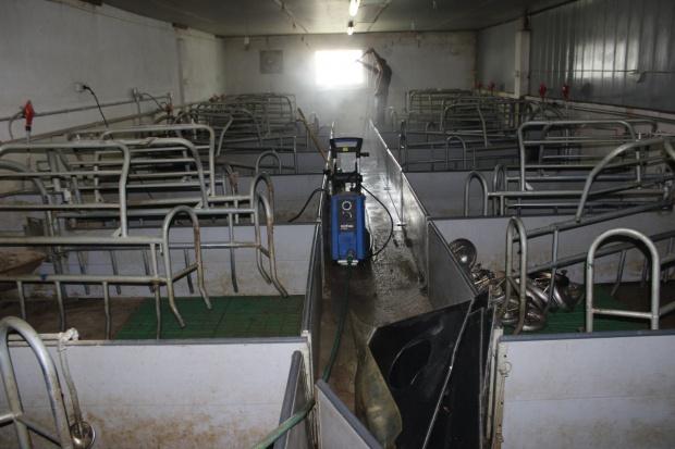 ARiMR pomoże rolnikom realizującym program bioasekuracji