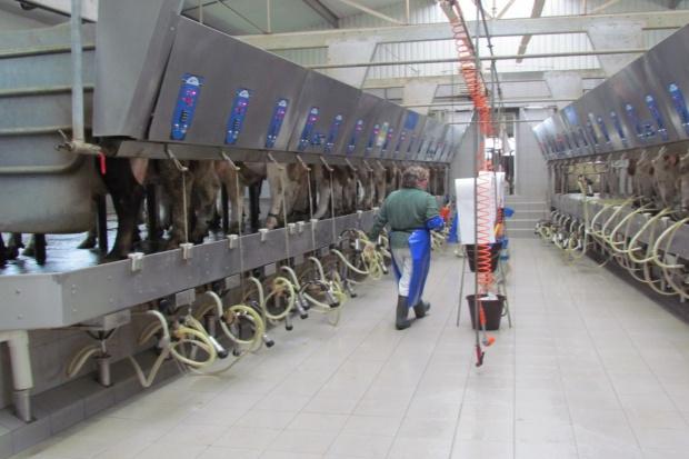 Pół roku od uwolnienia rynku mleka: ceny poszły w dół
