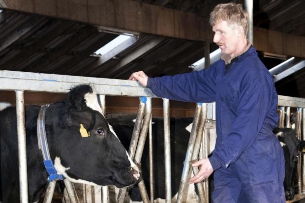 Pogłowie krów mlecznych w  woj. lubuskim spadło o 23,9 proc.