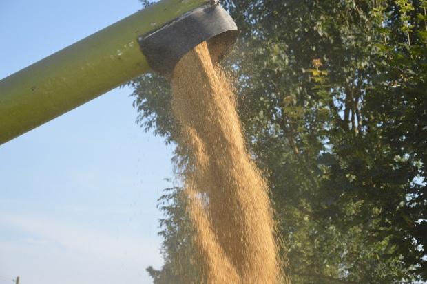 Eksportujemy coraz więcej ziarna i produktów przetwórstwa zbożowego