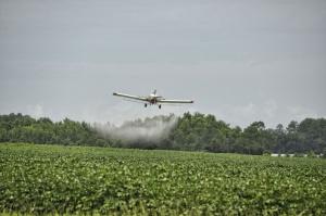 EFSA nie sądzi, by glifosat miał działanie rakotwórcze