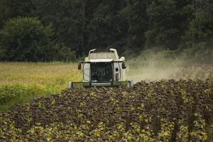 Czy słonecznik i orzech ziemny zastąpią soję?