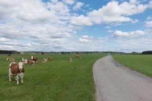 ARiMR: Koniec naboru wniosków na inwestycje w produkcję prosiąt i bydła