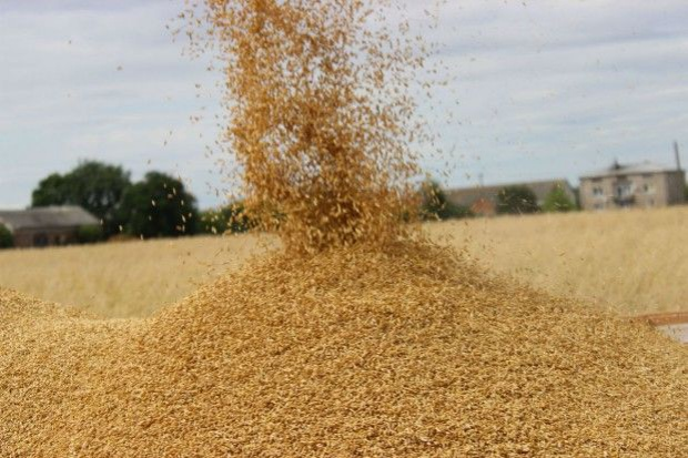 Spadki i wzrosty cen zbóż w skupach