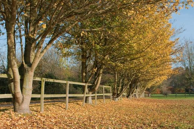 Sąsiedzkie spory - drzewo przy granicy