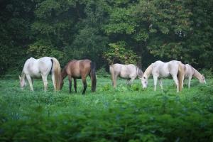 Paryż: Tryumf polskich koni i hodowców
