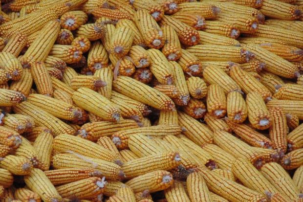 Ukraina zwiększa eksport rolno-spożywczy do Chin