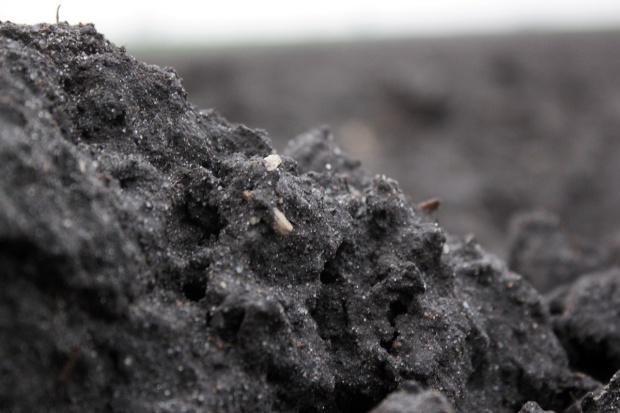 5 grudnia – Światowy Dzień Gleby