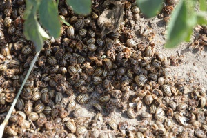 Jakie czekają nas cięcia w środkach ochrony roślin