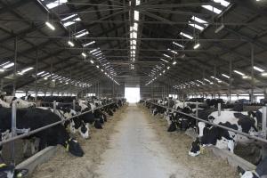 Chiński rynek dla eksporterów produktów mleczarskich się kurczy