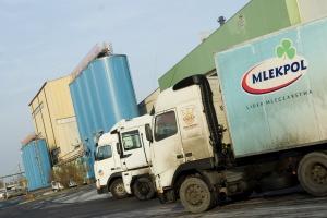Rekord skupu mleka mleczarni z Grajewa