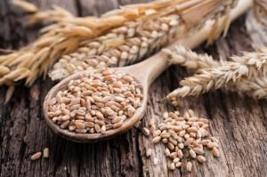 GUS: Zbiory zbóż niższe o 12 proc. w porównaniu z rokiem 2014